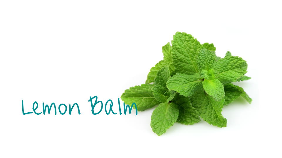 Lemonbalm_header